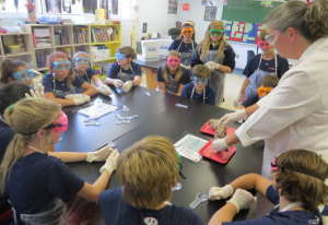 Students examining a pig heart in science.
